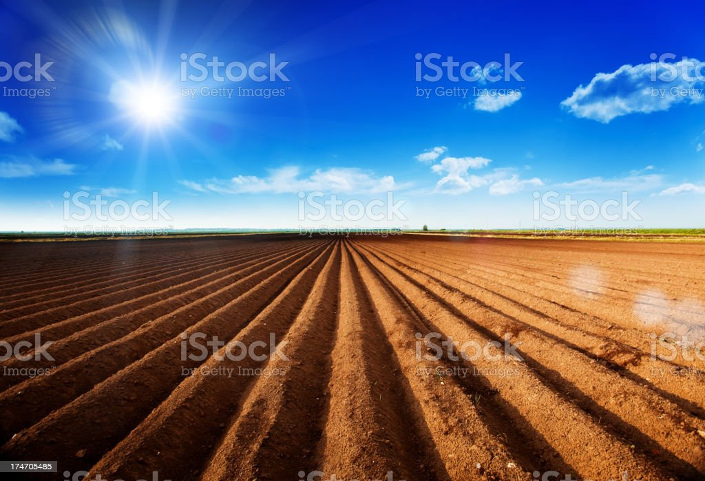 Field over blue sky royalty-free stock photo