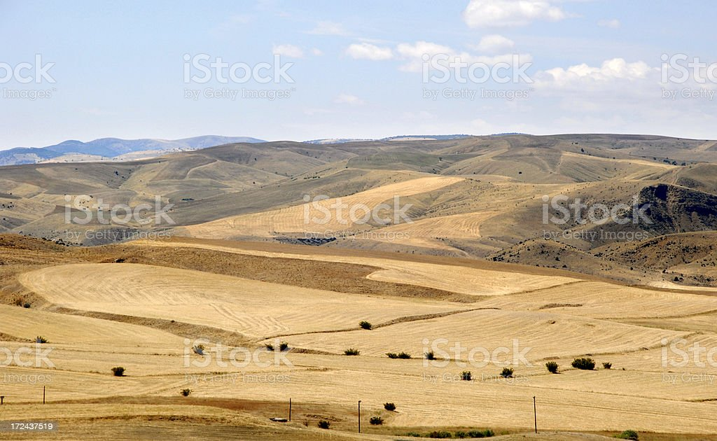 Field (Click for more) royalty-free stock photo