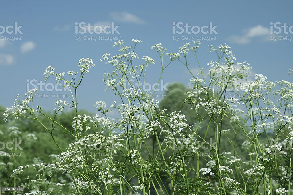 Field. stock photo