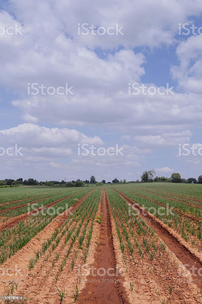 field royalty-free stock photo