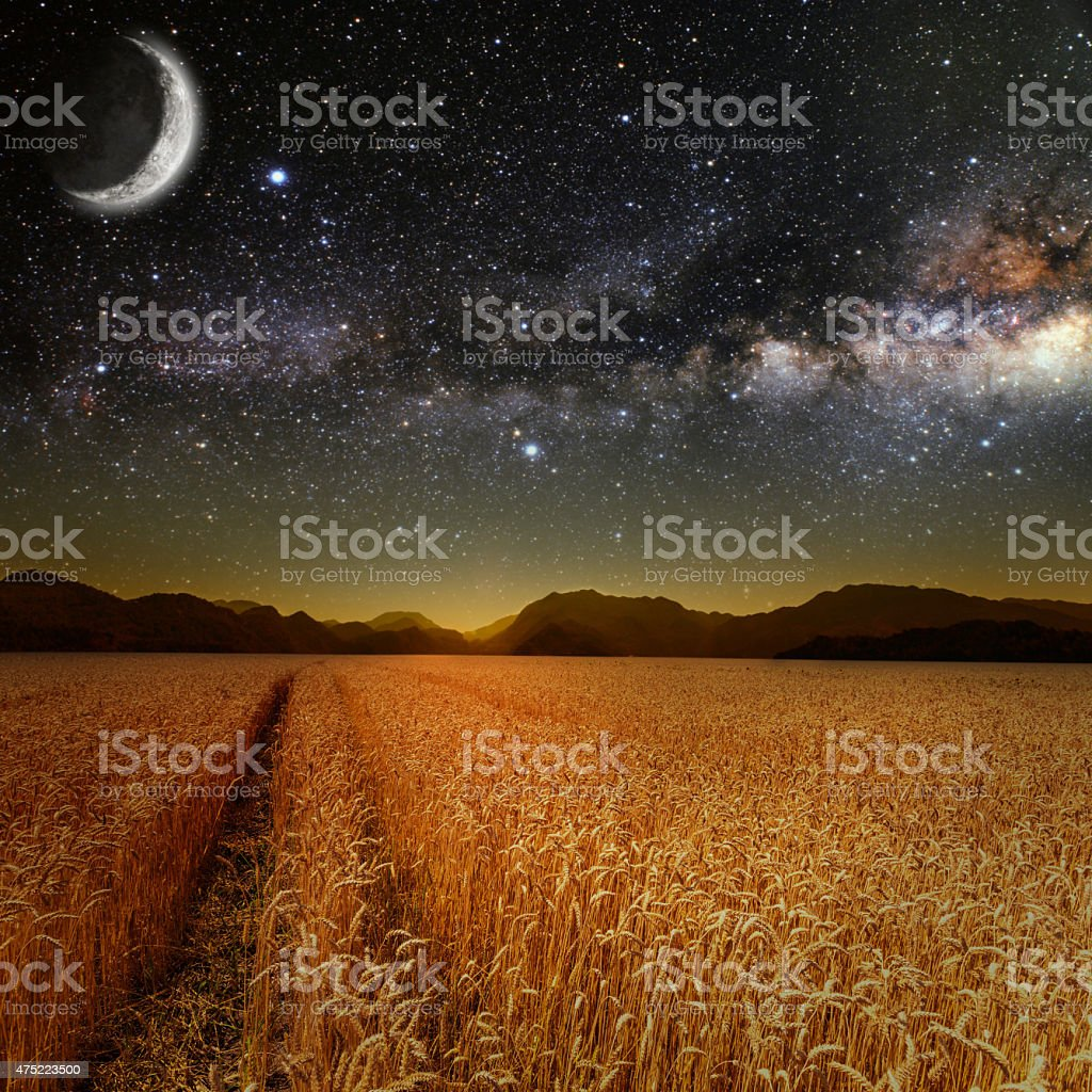 field stock photo