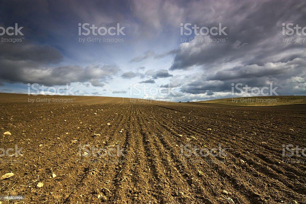 Field. stock photo