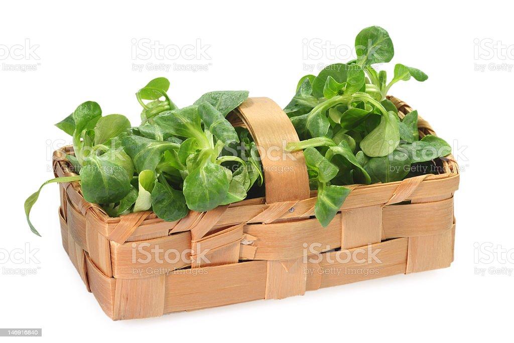 Field salad royalty-free stock photo