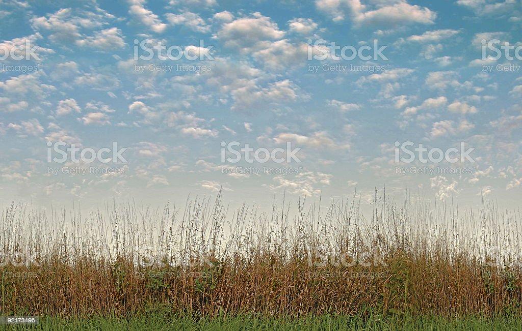 Field & Sky royalty-free stock photo