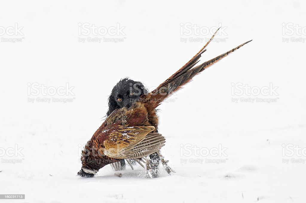 Field Sports in England royalty-free stock photo