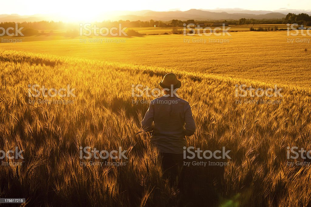 Field Standing Young Adult Man Watches Sunset in Peace royalty-free stock photo