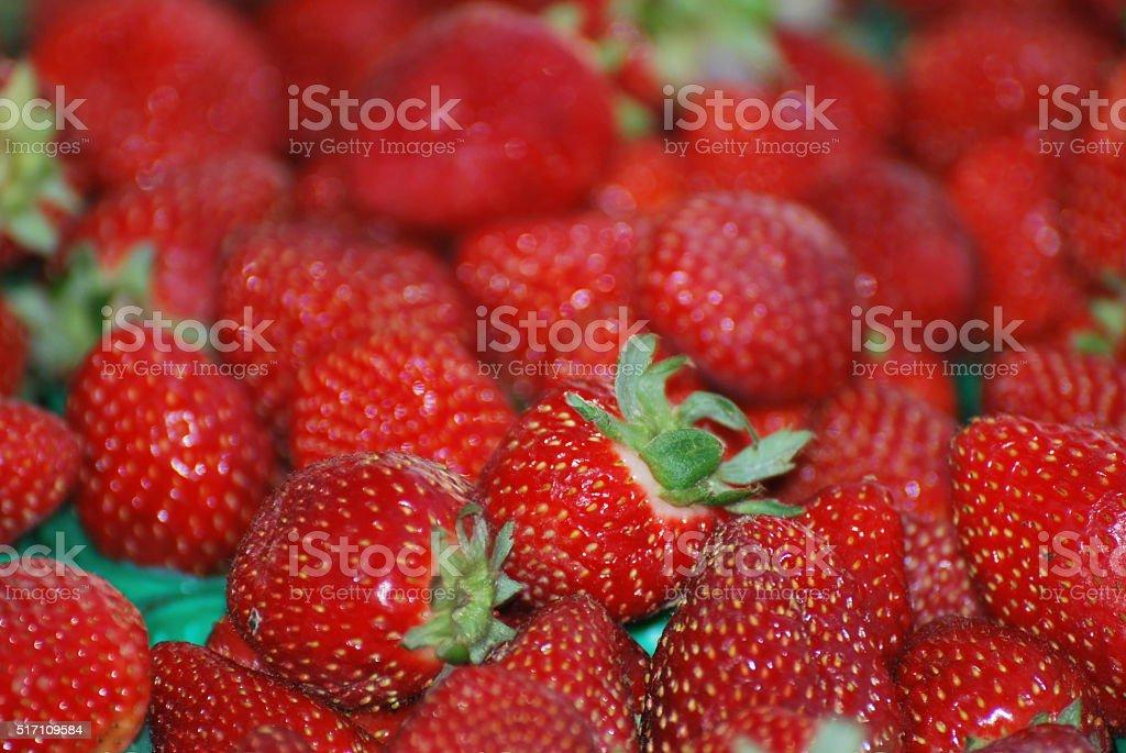 field strawberries stock photo