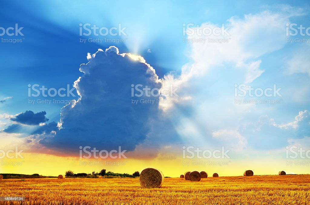 Field Stubble Landscape with Straw Bales in Summer stock photo