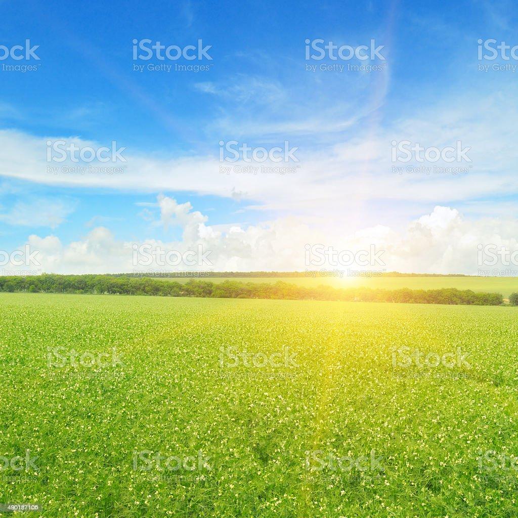 field, sunrise and blue sky stock photo