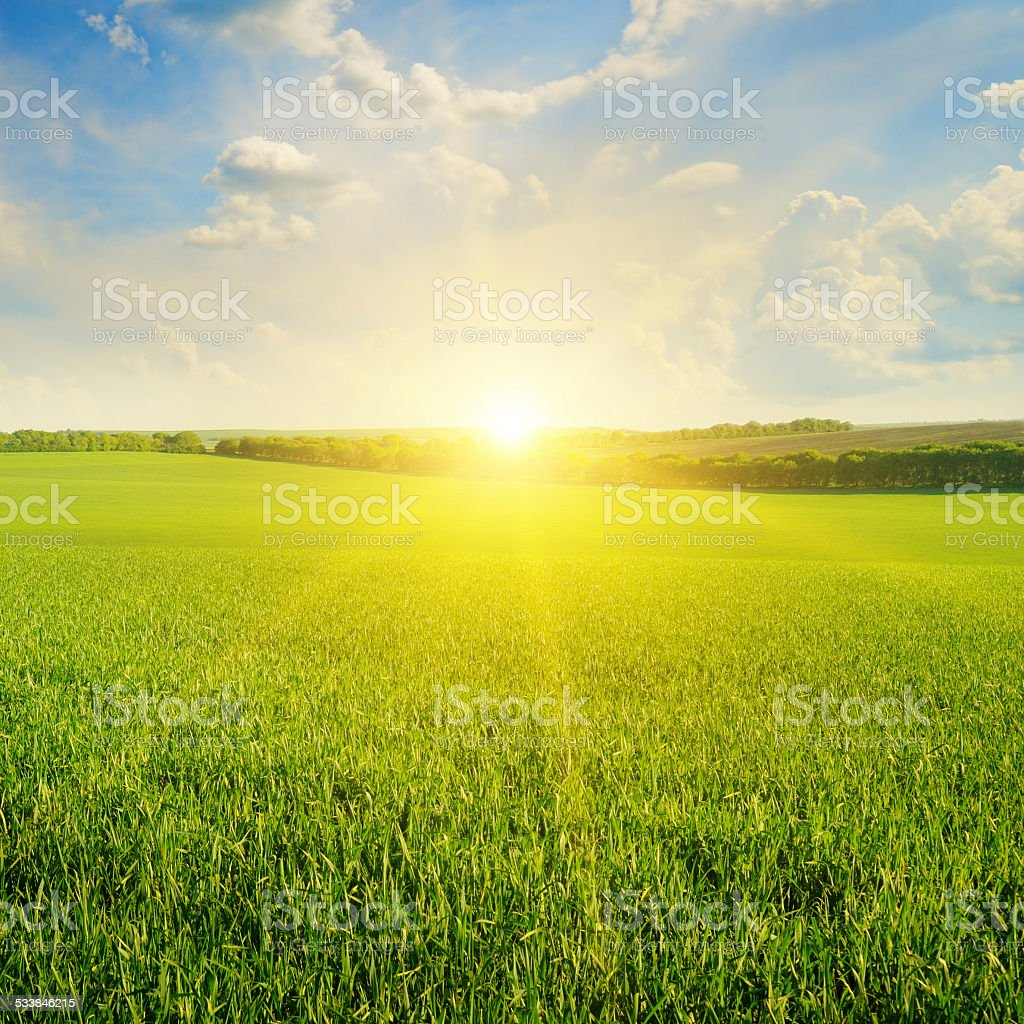 field, sunrise and  sky stock photo