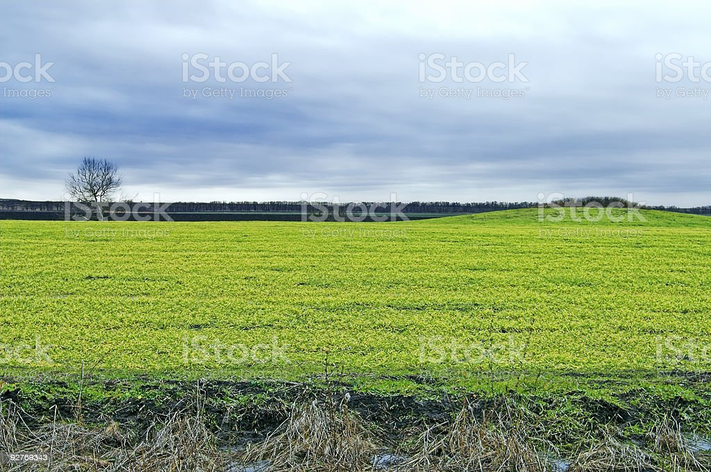 Field, tree, and hill royalty-free stock photo