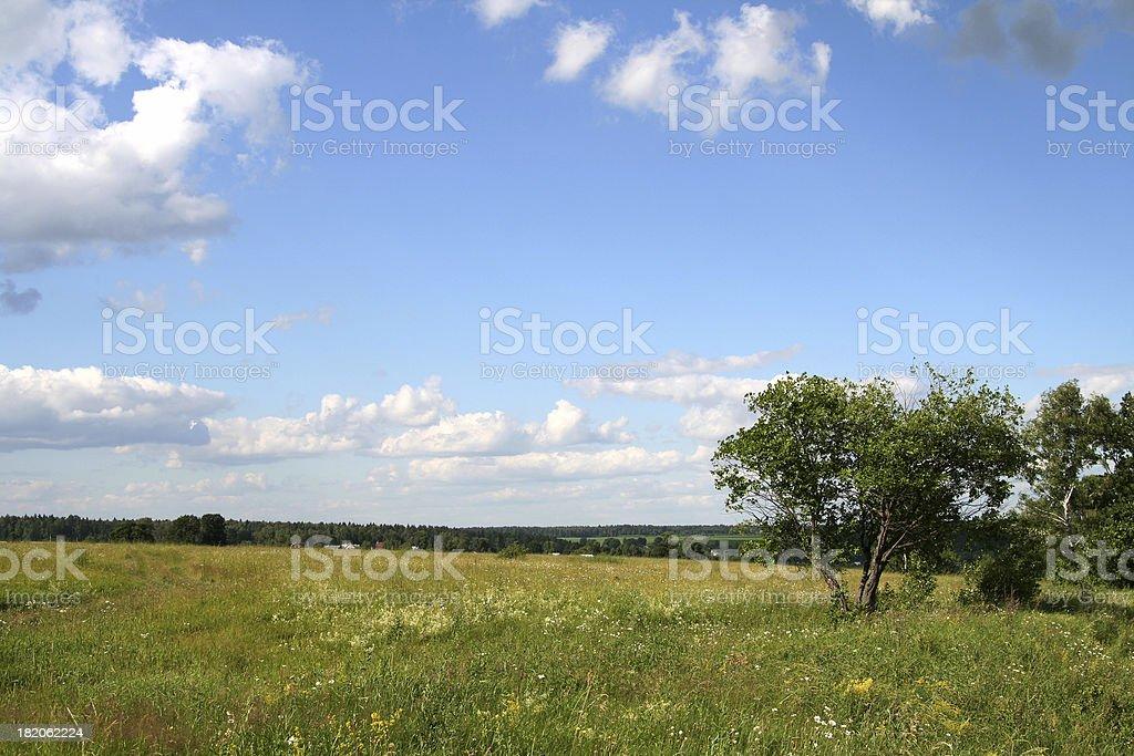 Field, trees, blue sky royalty-free stock photo