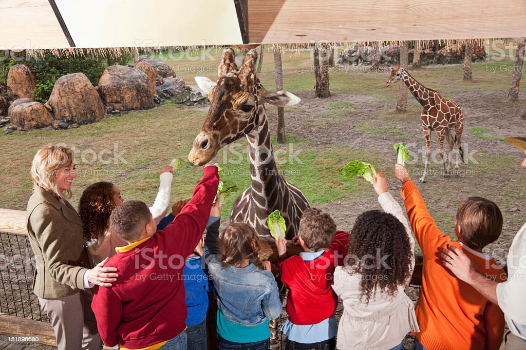 Field trip to the zoo royalty-free stock photo