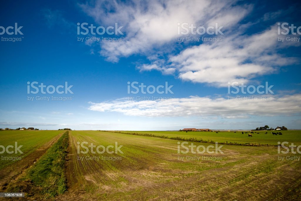 Field view with cows royalty-free stock photo
