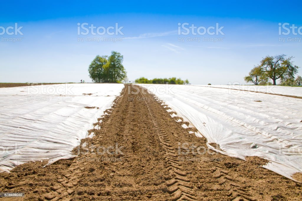 Field with a cover sheeting stock photo
