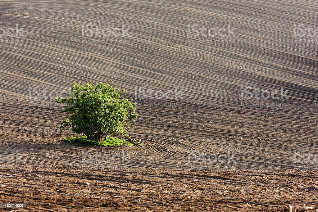 field with a tree royalty-free stock photo