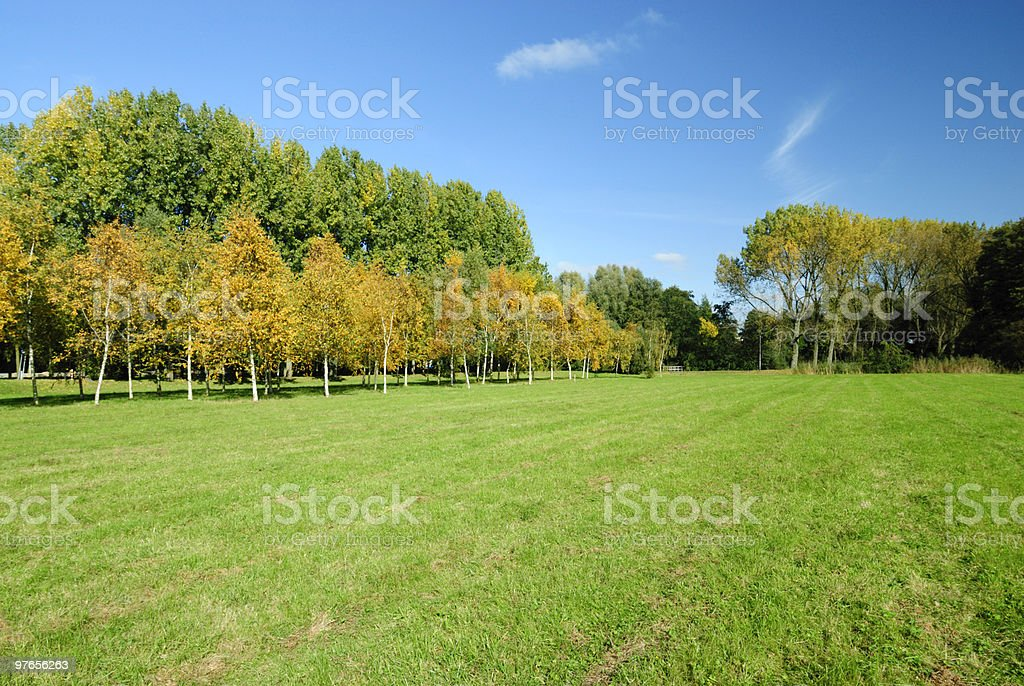 Field with autumn trees stock photo