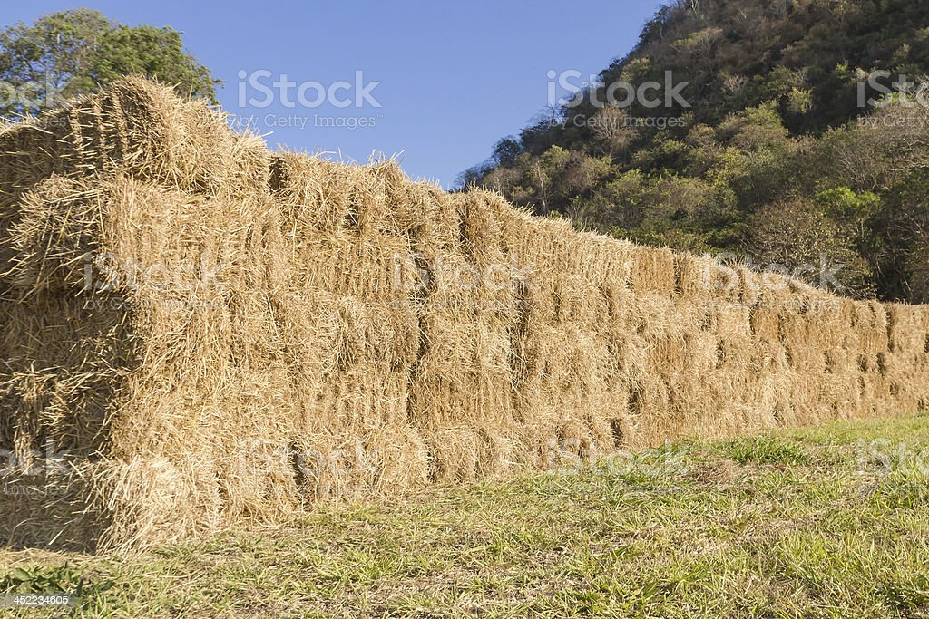 Field with bales of hay royalty-free stock photo