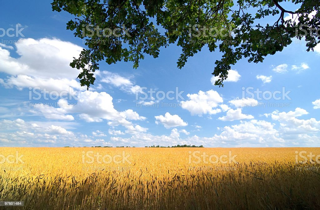 Field with branch royalty-free stock photo