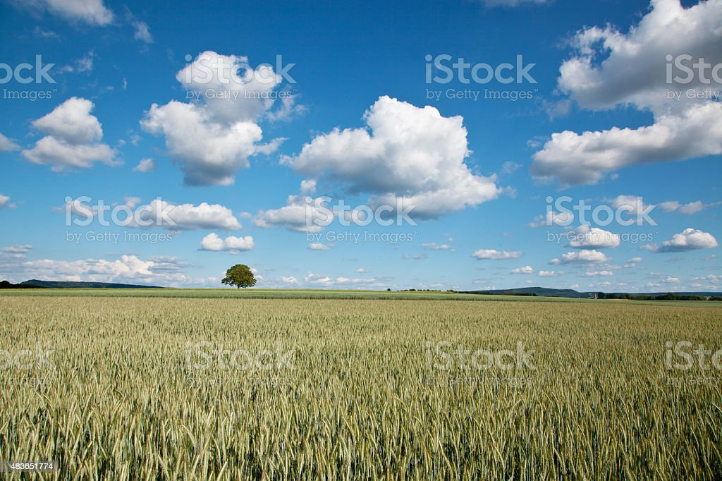 field with cloudy sky stock photo