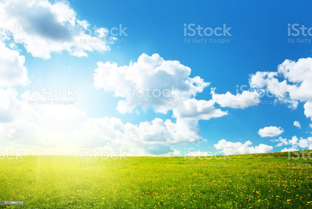 Field with dandelions and blue sky stock photo