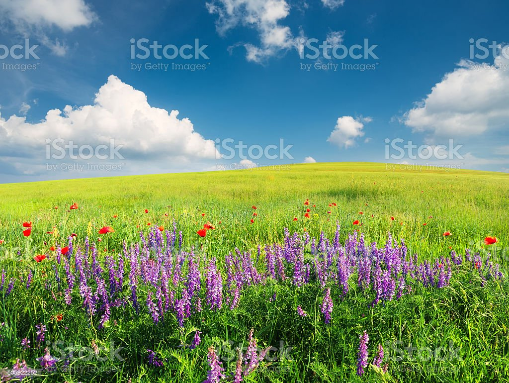 Field with flowers stock photo