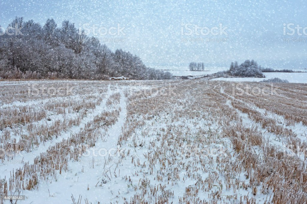 Field with harvested rye and groves covered with first snowfall. stock photo