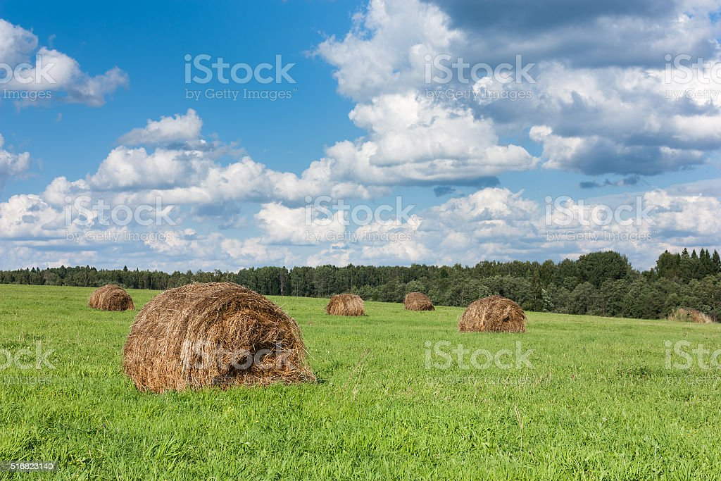 Field with haystacks and trees. stock photo