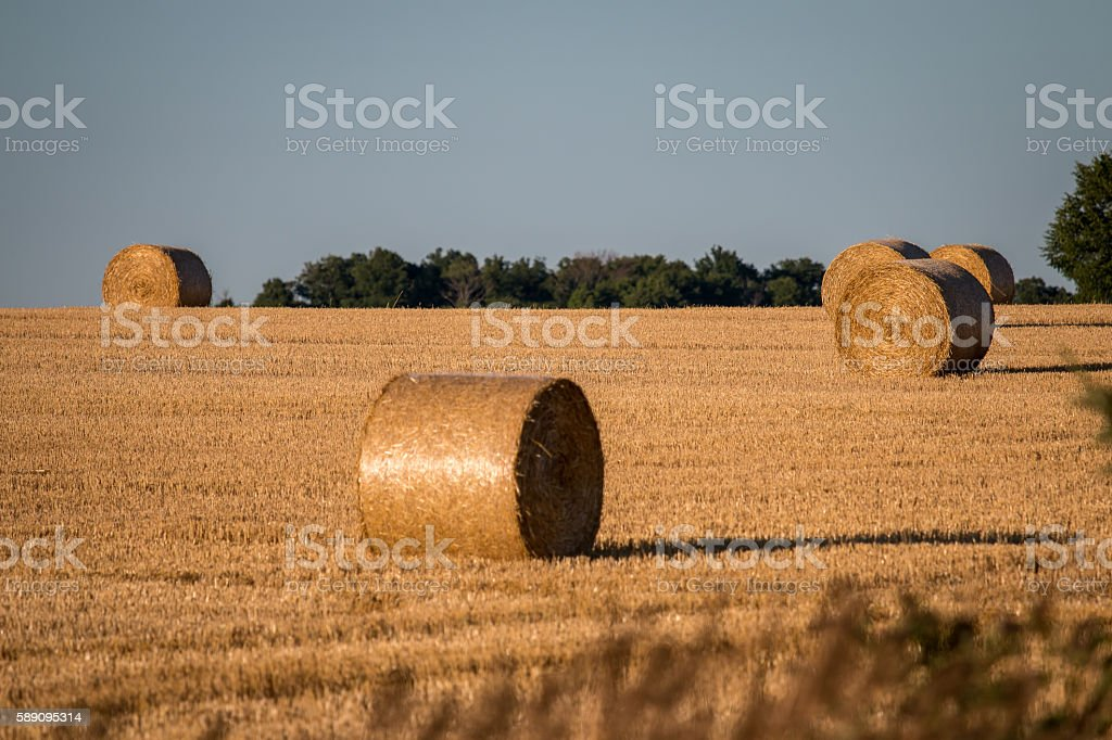 Field with Hey Bales stock photo