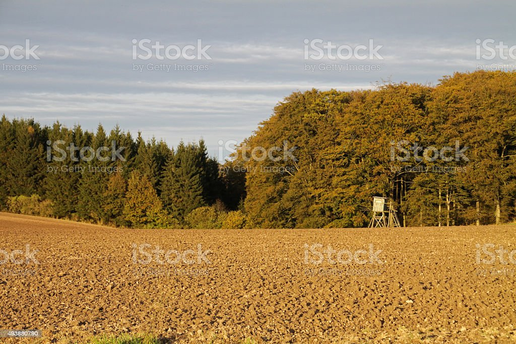 Field with high seat next to the forest stock photo