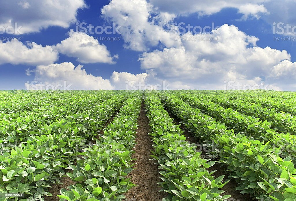 Field with line stock photo