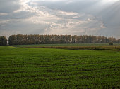 Field with seedlings