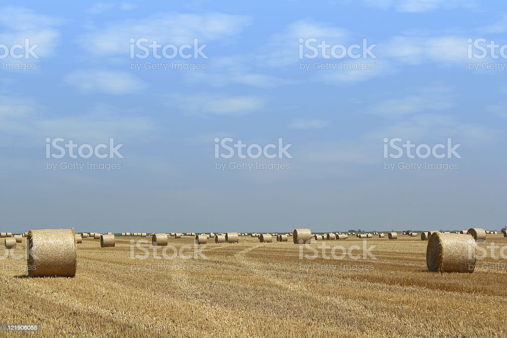 field with straw bales stock photo