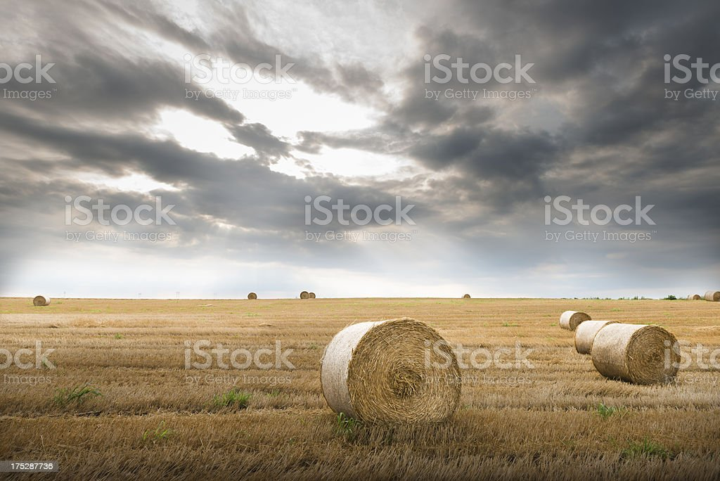 field with straw bales royalty-free stock photo