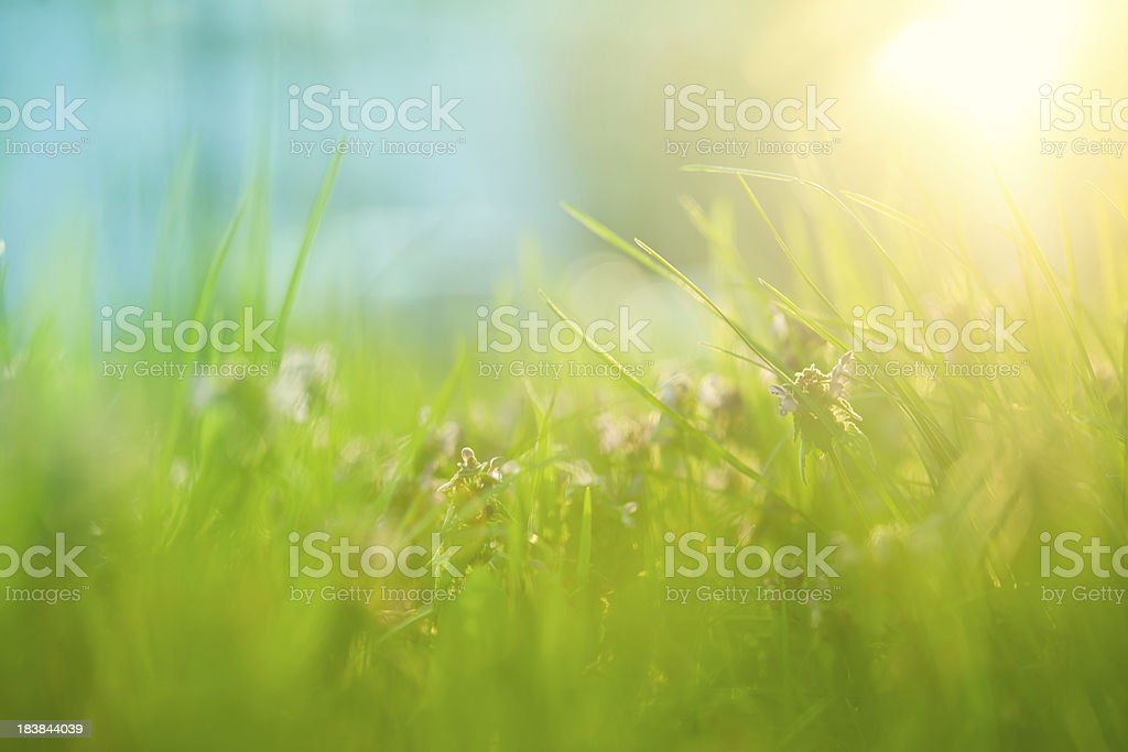 Field with sunlight stock photo