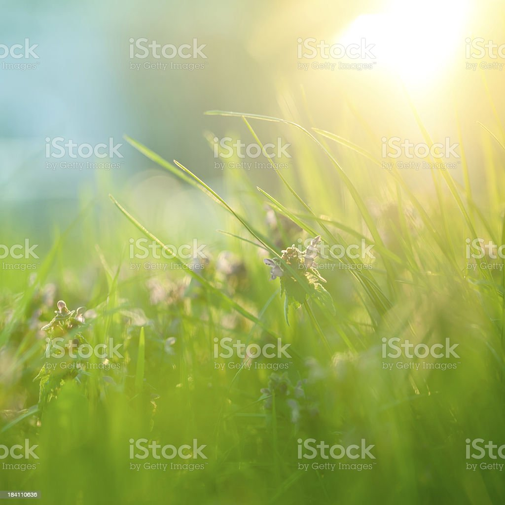 Field with sunlight royalty-free stock photo