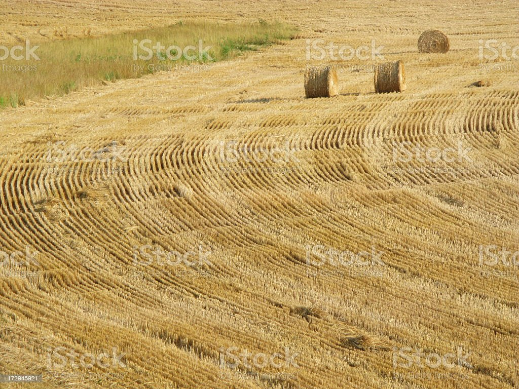 Field With Three Round Hay Bales royalty-free stock photo