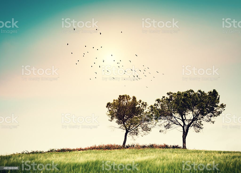 Field With Trees And Flying Birds stock photo