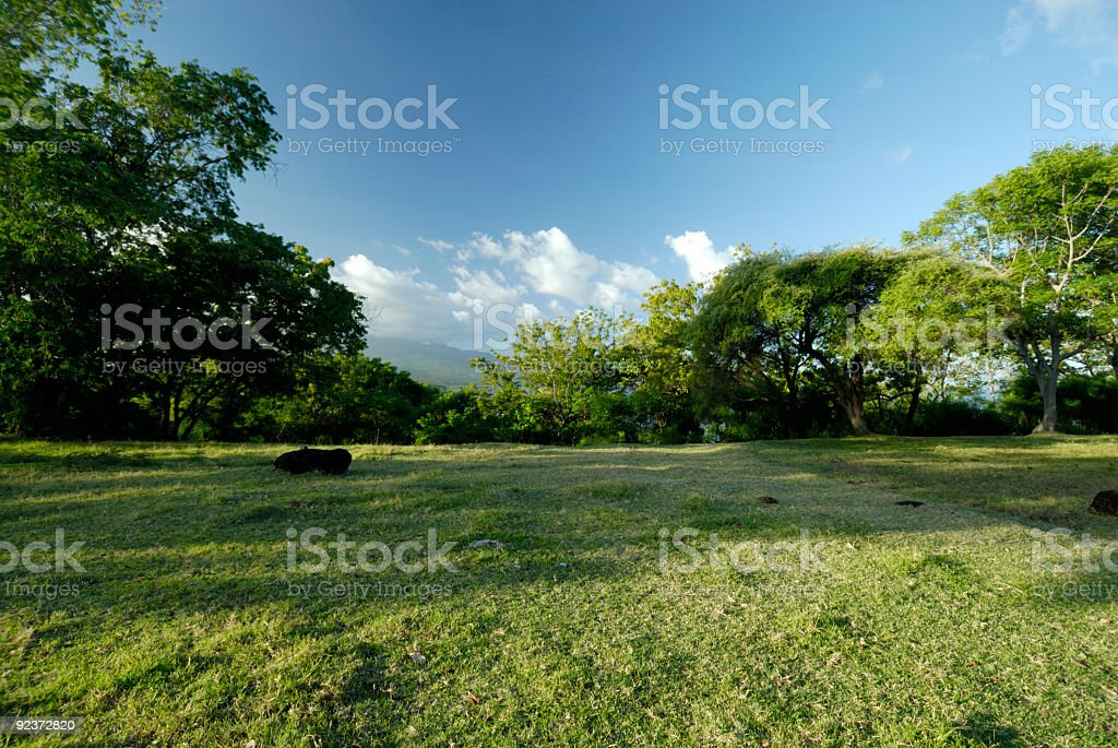 Field with trees in Bali royalty-free stock photo
