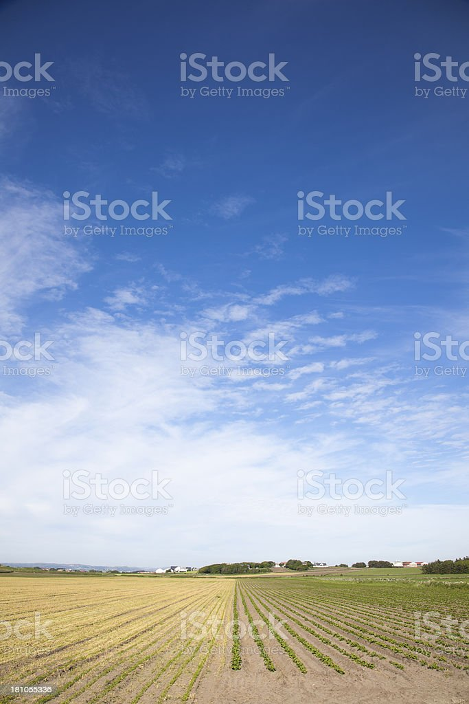Field With Vegetables And Cloudscape stock photo