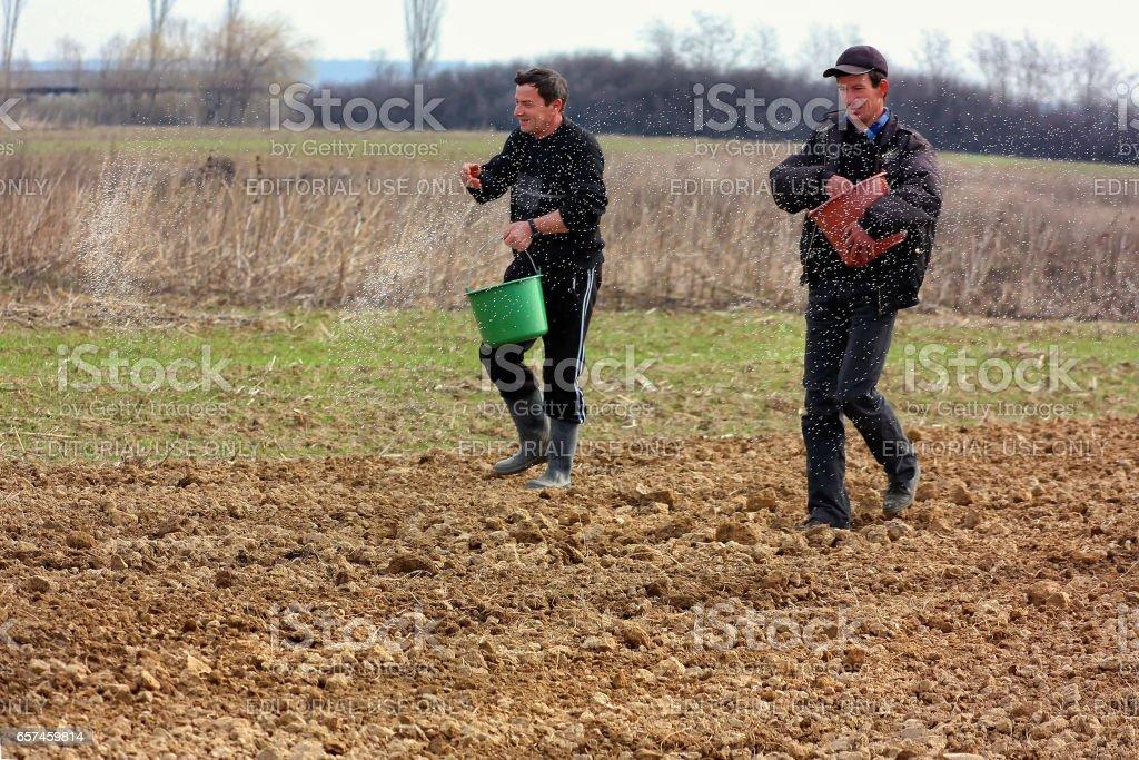 Field work in rural areas of Transcarpathia in springtime stock photo