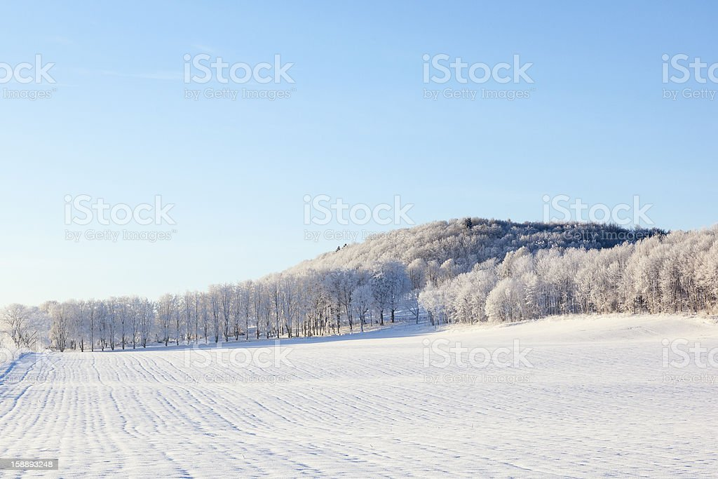 Fields and forest in winter landscapes royalty-free stock photo