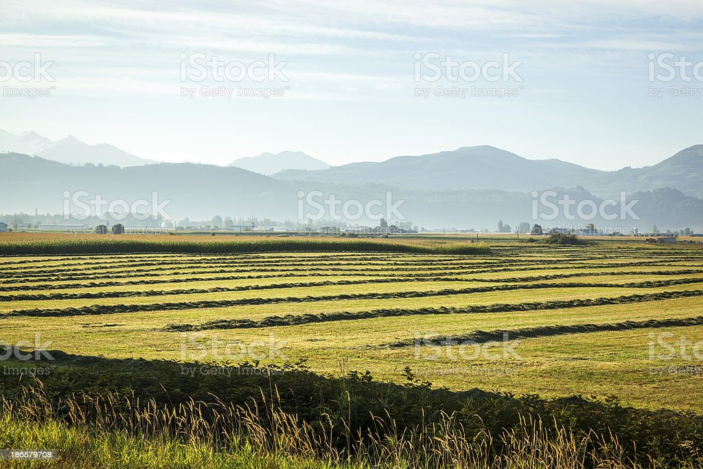 Fields and Mountains royalty-free stock photo