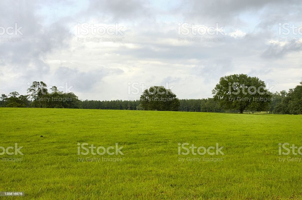 Fields and Trees -2 royalty-free stock photo