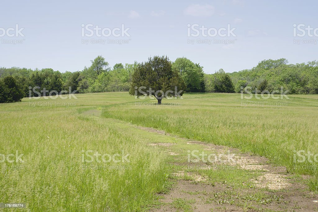 fields and trees royalty-free stock photo