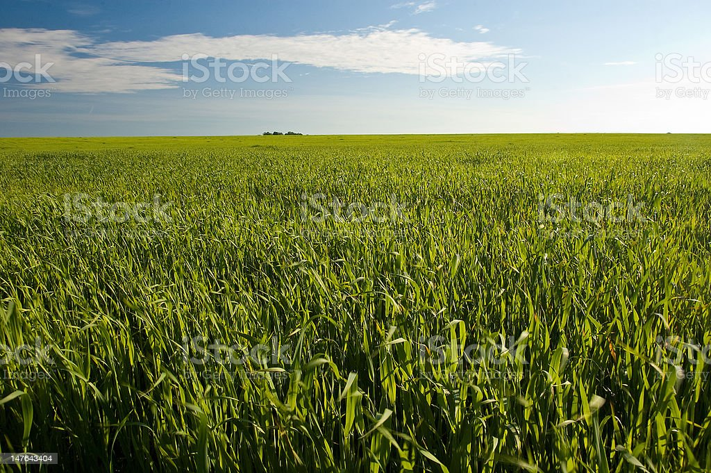Fields at summer royalty-free stock photo