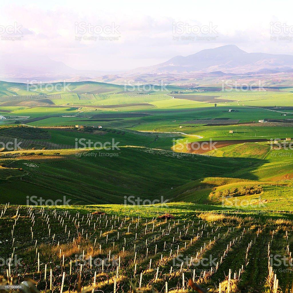 fields in evening light stock photo