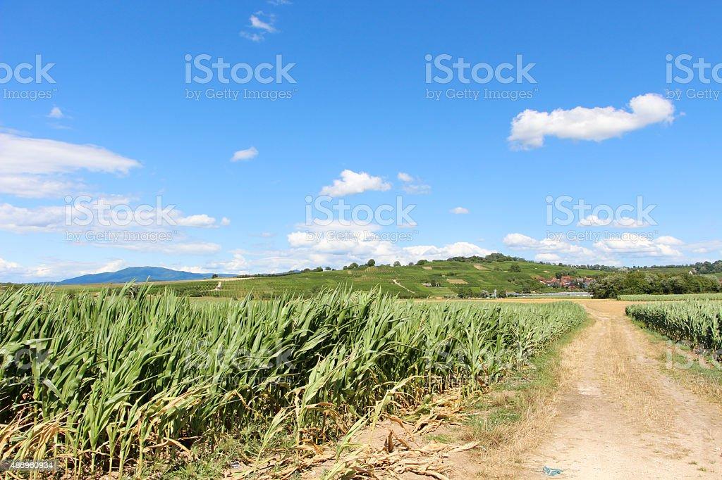 Fields in France stock photo