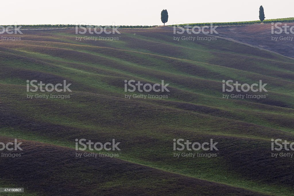 Fields in, San Quirico d'orcia, Tuscany, Italy stock photo