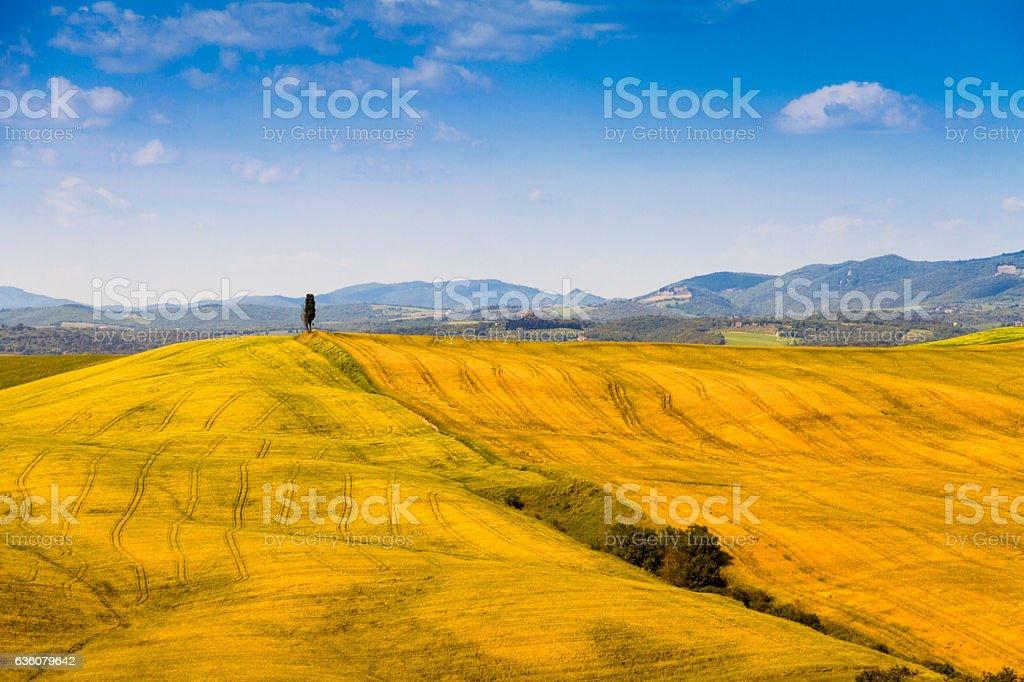 Fields in Tuscany, Italy stock photo